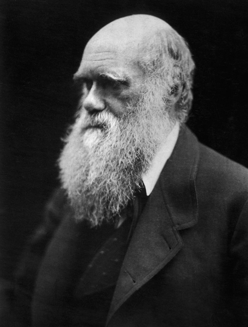 Чарльз Роберт Дарвин 1809-1882 A photograph of Charles Darwin by Julia Margaret Cameron, from 1868